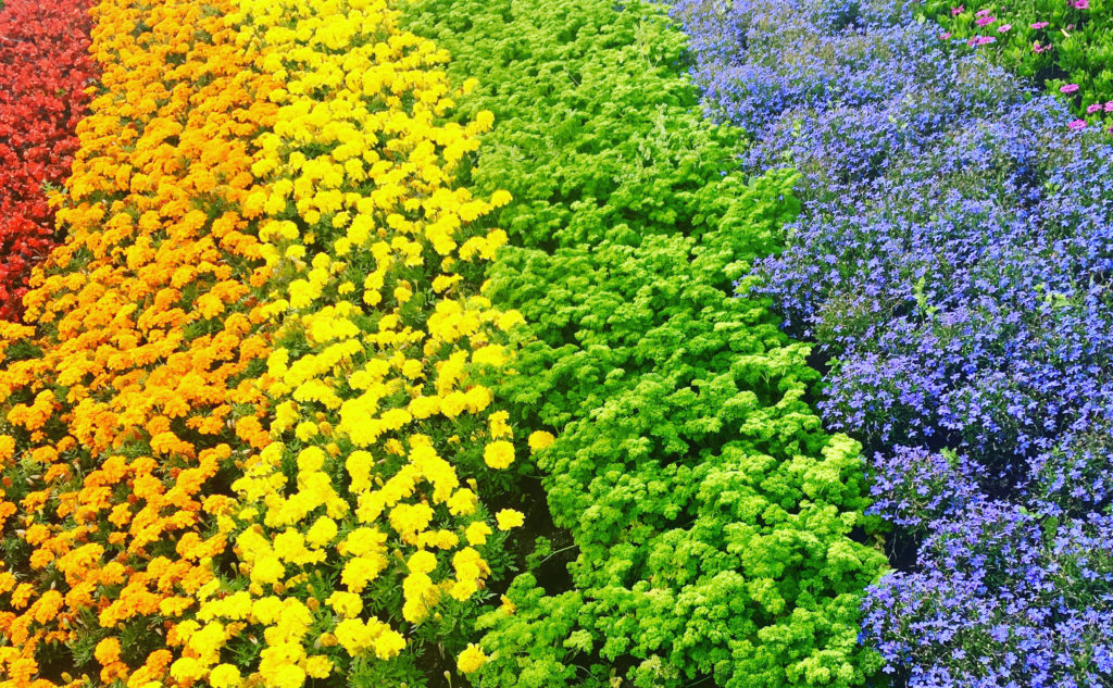 Link to event Waste flower wreath workshop